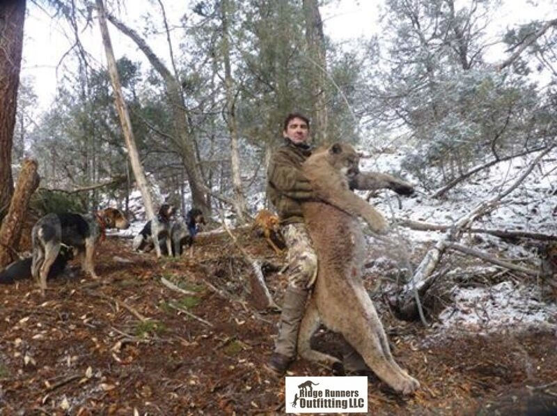 Northern Colorado's Premier Mountain Lion Outfitter